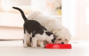 dog_cat-share-food